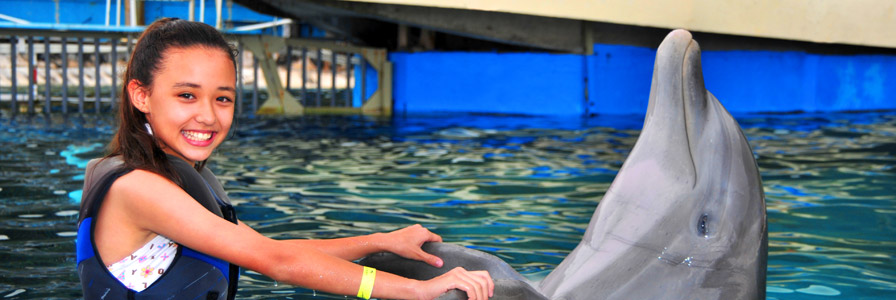 Sea Life Park Dolphin Encounter