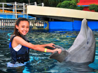 playing with a dolphin at sea life park