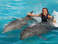 dolphin royal swim at sea life park hawaii