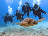 scuba diving at Hanauma Bay with a sea turtle