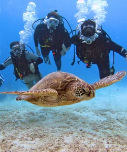 scuba divers with a turtle in oahu, hawaii hanauma bay