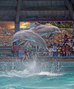 dolphin show at sea life park hawaii