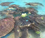green sea turtle exhibit at sea life park in oahu