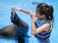 small girl feeding sea lion at sea life park hawaii