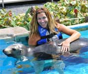 sea lion swim at sea life park hawaii